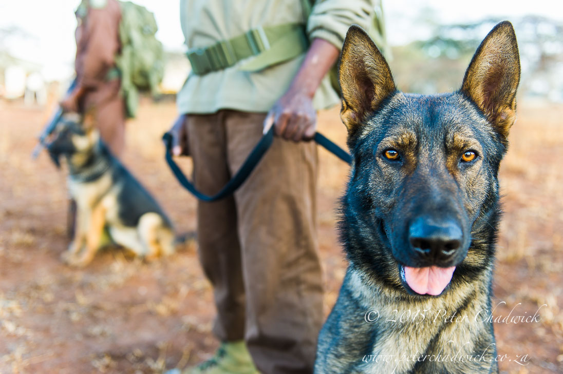 Anti_Poaching-Dog