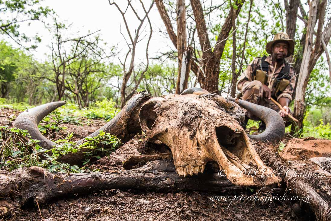Rangers monitoring wildlife_©PeterChadwick_AfricanConservationPhotographer