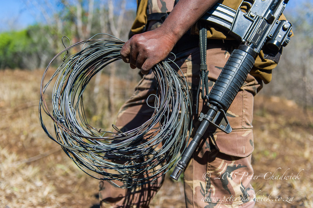 Rangers_recovering_snares_©PeterChadwick_AfricanConservationPhotographer