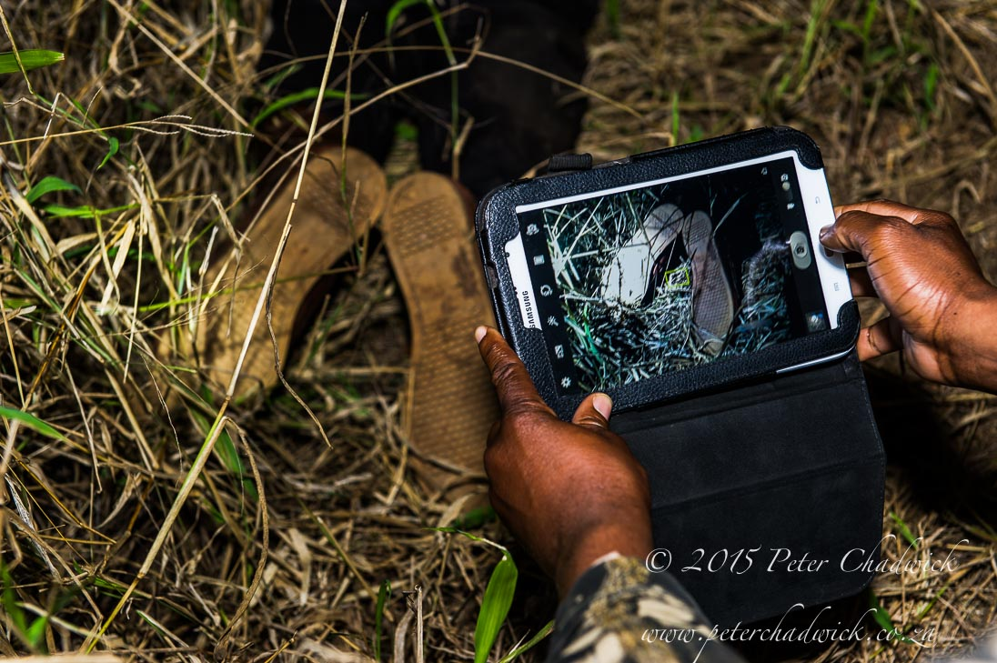 Rhino_poacher_PeterChadwick_AfricanConservationPhotographer