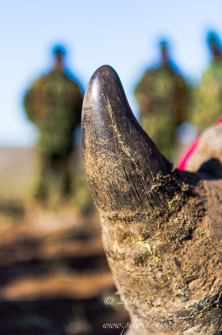 White_Rhino_and_Rangers_©PeterChadwick_AfricanConservationPhotographer 3