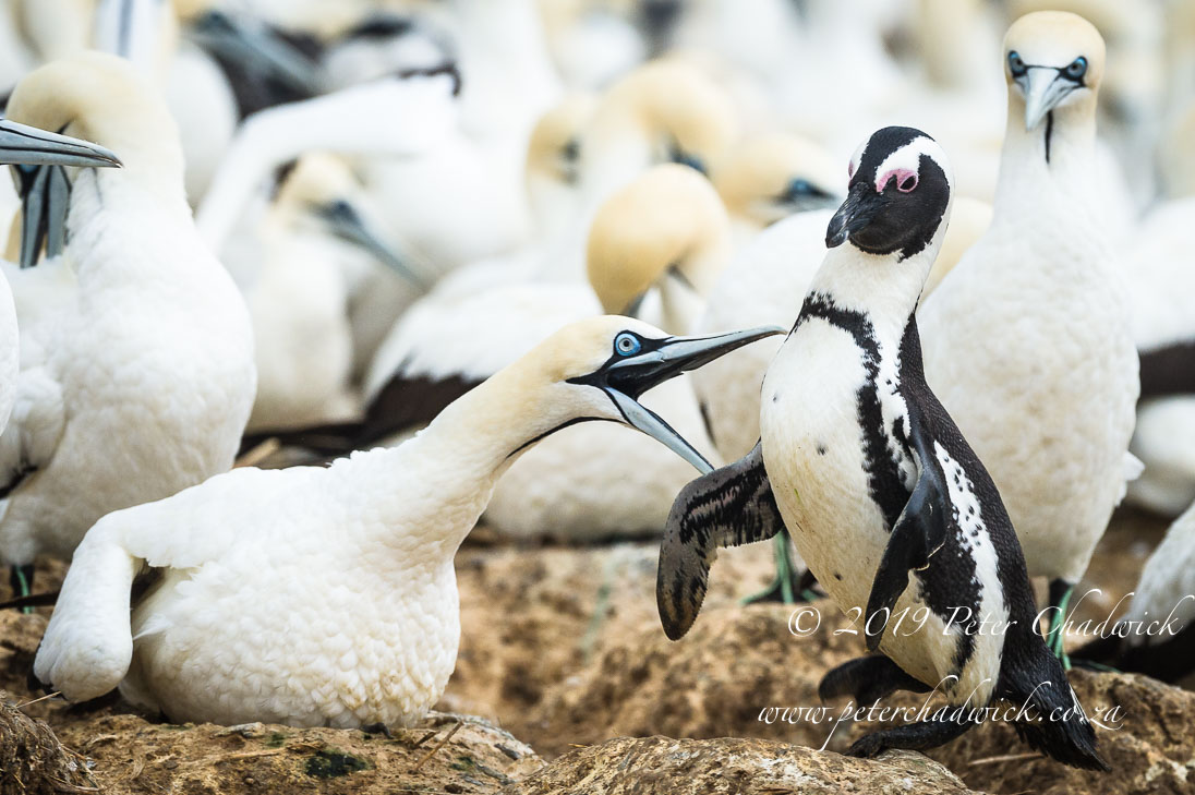 Addo Marine Protected Area_©PeterChadwick_AfricanConservationPhotographer
