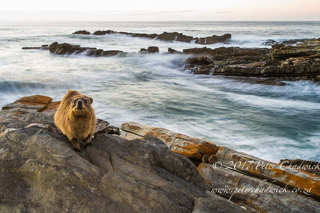 South Africa's Garden Route by Conservation Photographer Peter Chadwick