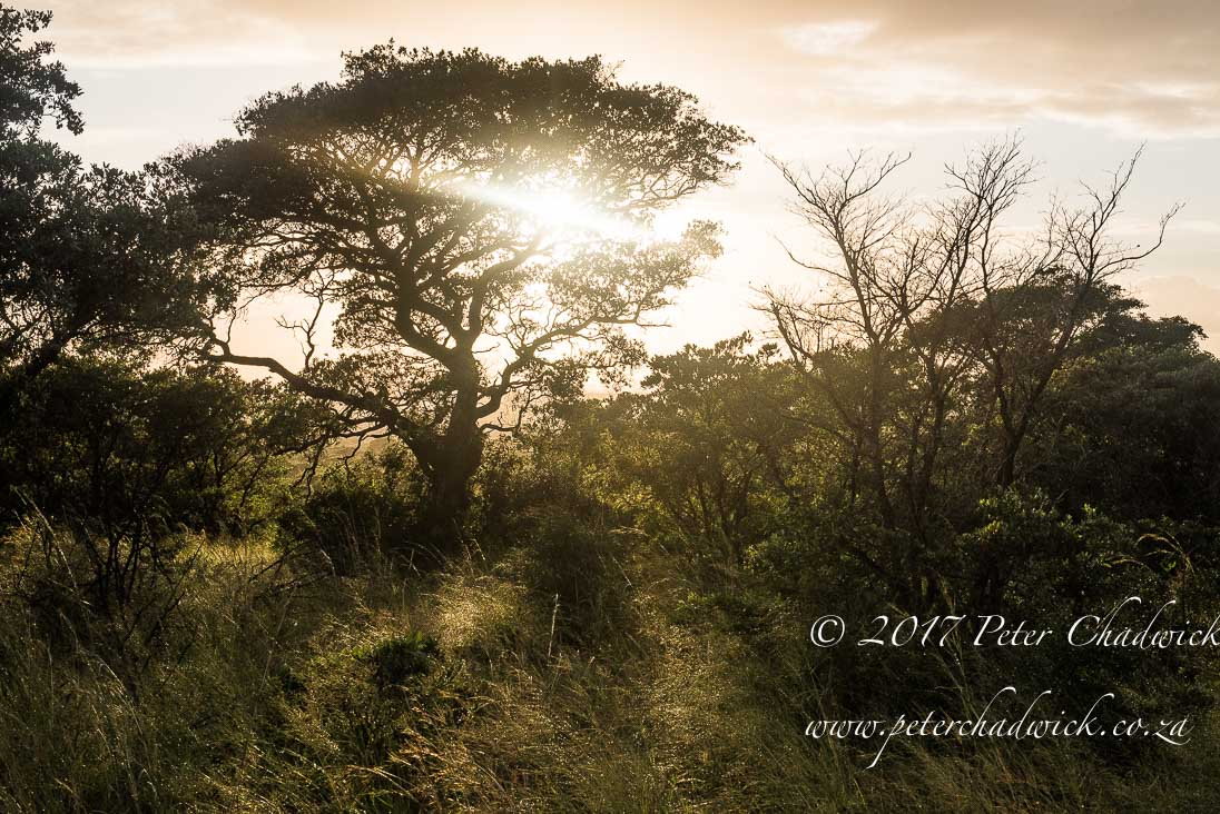 Zululand's Wildlife Rejuvenation by Conservation Photographer Peter Chadwick